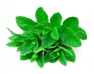 Planta medicinal menta