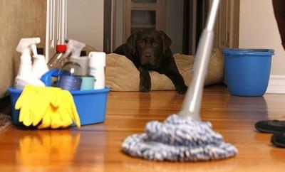 Trucos para que la casa no huela a perro