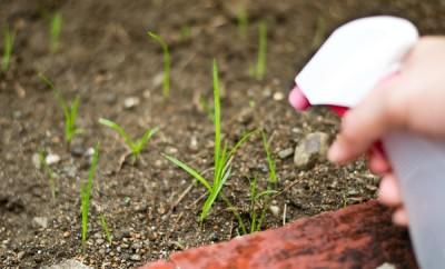 Cómo eliminar las malas hierbas con vinagre
