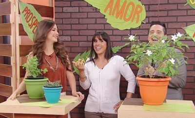Plantas que atraen buenas energías