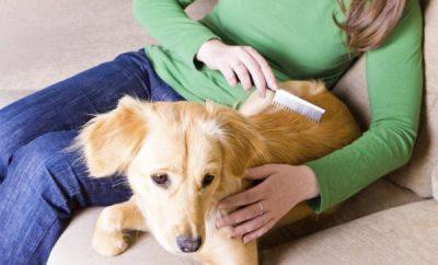 Cómo eliminar la caspa en un perro