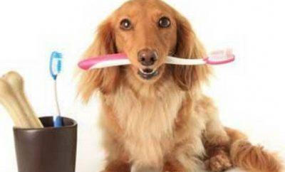 como-limpiar-los-dientes-de-un-perro-en-casa