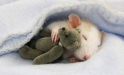 significado-de-sonar-con-ratones