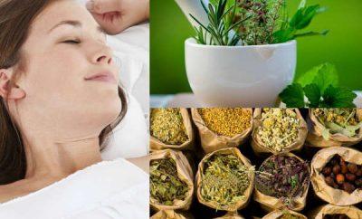 plantas naturales para dormir mejor