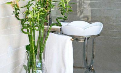 plantas que se pueden tener en el bano