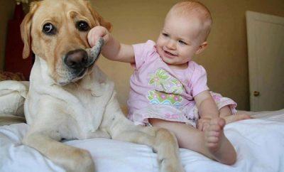 razones por las cuales un nino debe crecer con un perro