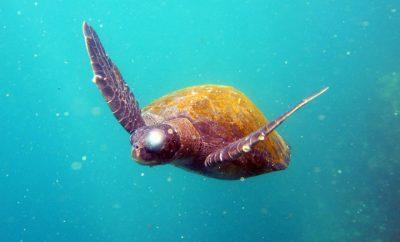 Itinerario viaje islas Galapagos, plan viaje galapagos